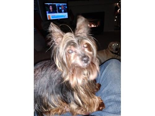 Lost Pet #101414