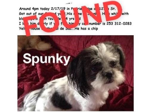 Found Pet #53138