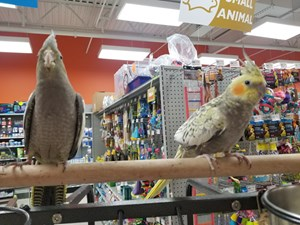 Available Birds | Petland Pickerington, OH