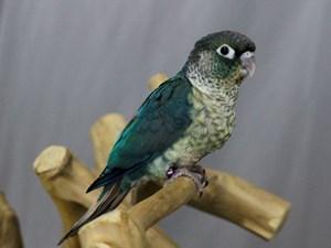 Pet Birds for Sale – Petland Lewis Center - Columbus, Ohio