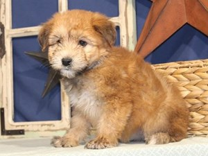 Dogs And Puppies For Sale Petland Knoxville Pet Store Tn
