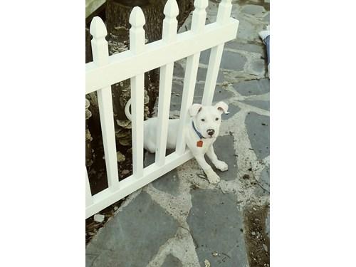 Found Pet #53338