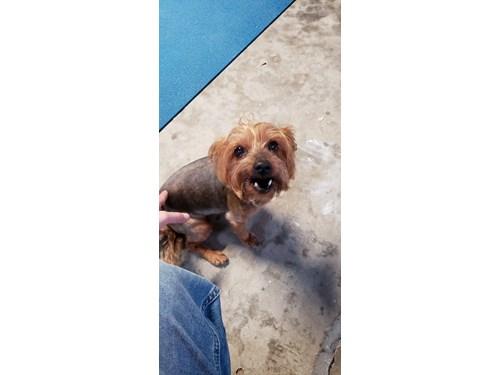 Found Pet #53360
