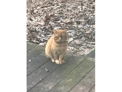Found Pet #53375