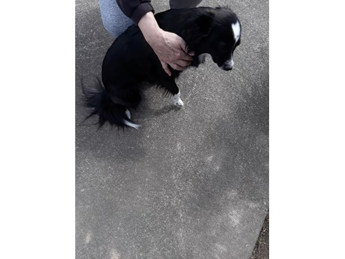 Found Pet #53380