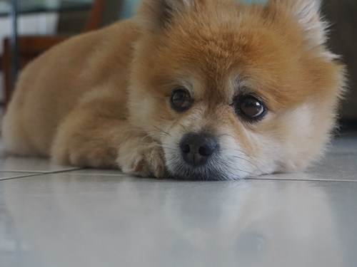 Lost Pet #102166