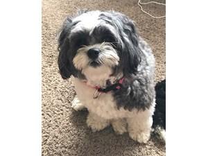 Lost Pets Near 32504 (Pensacola, FL)