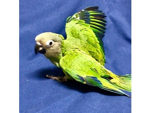 Available Birds For Sale - Petland Fort Walton, FL