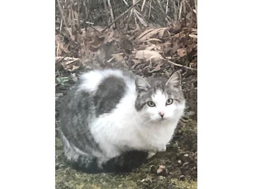 Found Pet #53575