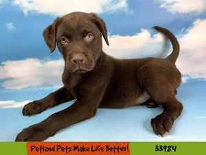 Dogs Puppies For Sale Petland Rockford Illinois Pet Store