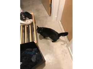 Lost Pets Near Seattle, WA