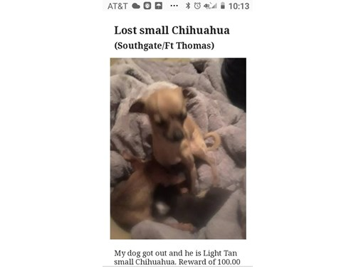 Beaner, a lost dog, is missing in Southgate, KY 41071