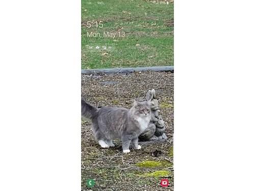 Lost Pet #103692