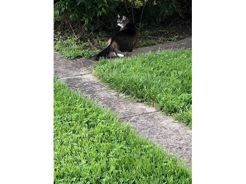 Found Pet #53845