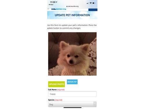 Lost Pet #103699