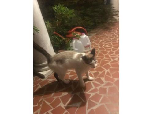 Found Pet #53854