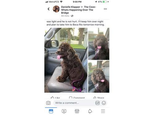 Found Pet #53874