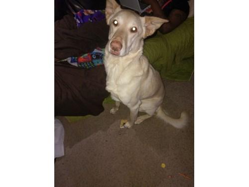 Lost Pet #103790