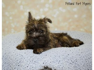 Dogs & Puppies for Sale | Visit Petland Fort Myers Today! | Fort