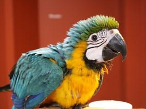 Beautiful Birds For Sale – Petland Knoxville Pet Store, TN