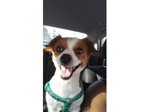 Lost Pets Near Wilton Manors, FL