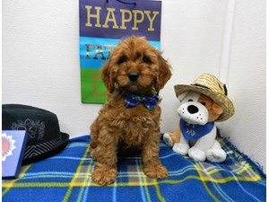 Dogs & Puppies for Sale - Petland Orlando South, FL