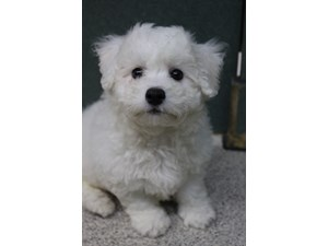 Dogs & Puppies for Sale - Visit Petland Montgomery, Alabama
