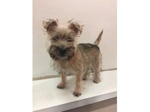 Puppies for Sale | Petland Jacksonville | Jacksonville, Florida