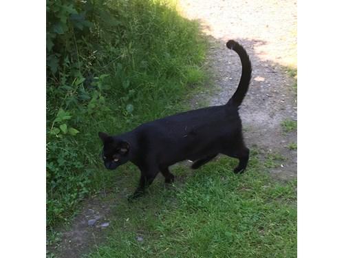 Found Pet #54113
