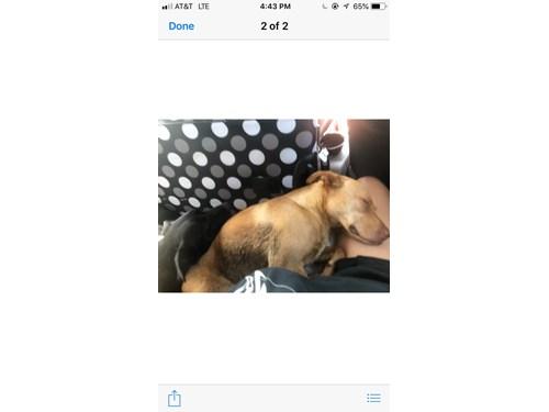 Found Pet #54122