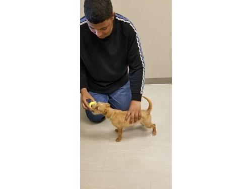 Lost Pet #104690