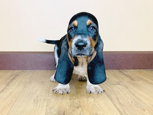 Dogs & Puppies for Sale - Petland in Grove City & Columbus, Ohio!