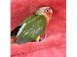 Available Birds   Petland Norwin, PA