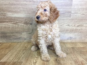 Puppies for Sale - Petland Stores in Athens, Ohio & Parkersburg, WV