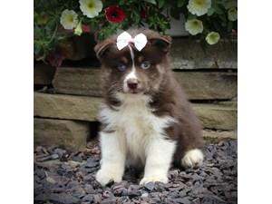 Basset Hound Puppies For Sale Craigslist - PetsWall