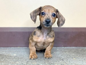 Dogs & Puppies for Sale - Petland Florence, Kentucky