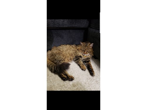 Found Pet #54313