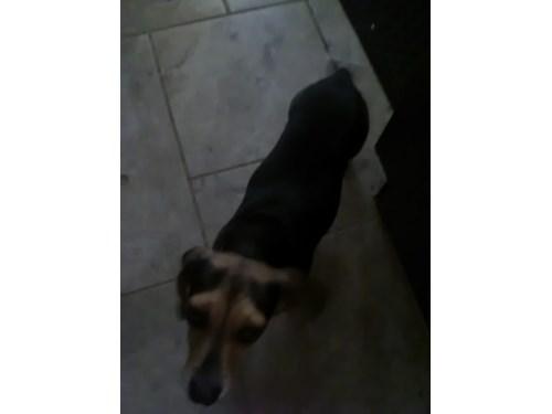 Found Pet #54316