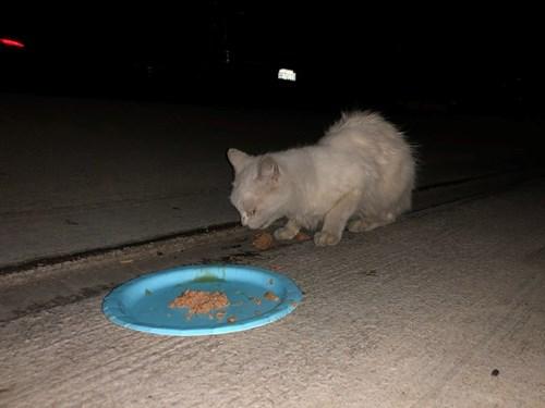 Found Pet #54323