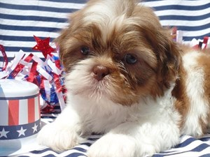 Dogs and Puppies For Sale - Petland Waterford Lakes Orlando, Florida