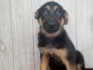 Puppies for Sale - Visit Petland Hilliard, Franklin County, Ohio Pet