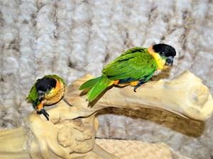 Birds - Petland Dunwoody