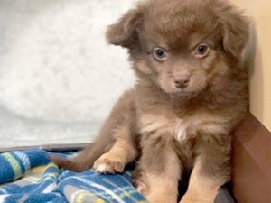 Puppies for Sale - Visit Petland in Licking County