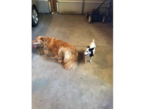 Found Pet #54374