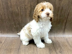 Petland Lancaster Puppies - Dogs and Puppies For Sale Ohio