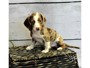 The Puppy Store | Puppies For Sale | Long Island NY