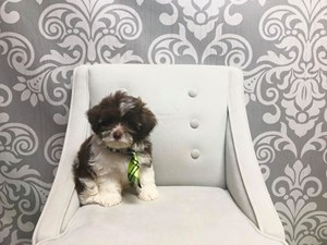 Furry Babies Inc  Available Puppies