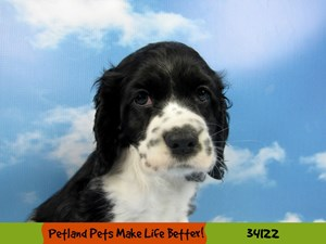 Dogs & Puppies for Sale - Petland Rockford, Illinois Pet Store