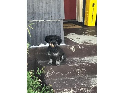 Raji A Lost Dog Is Missing In Spokane Wa 99208