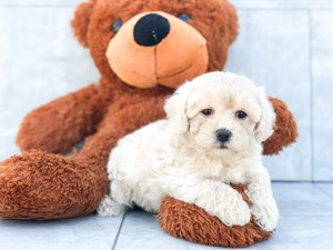 Dogs & Puppies For Sale - Visit us at Puppy Love in Roanoke, VA